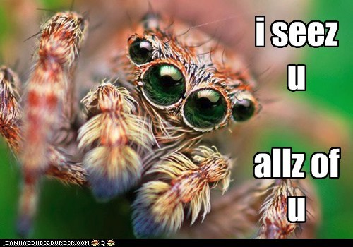 spider,eyes,i see you,all,everything,creepy,Staring,lolz