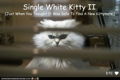 Single White Kitty II (Just When You Thought It Was Safe To Find A New Kittymate.) Y DTC