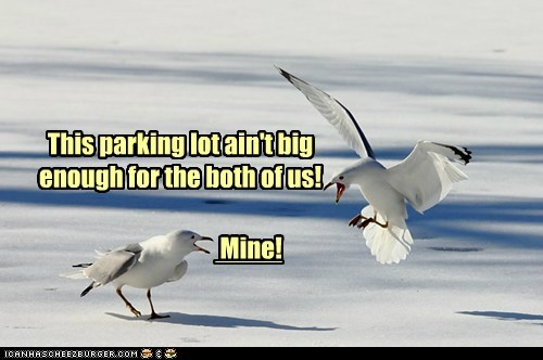 seagulls,yelling,parking lot,mine,finding nemo,argument,trash,all your base
