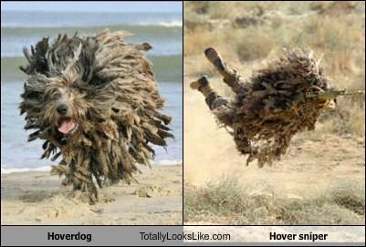 animal dogs funny sniper TLL - 6591380992
