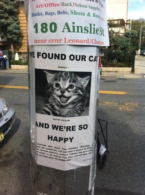 Cats,happy,Happy Kitten,Lost Cat,lost cat found,signs,the daily what