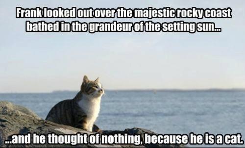 cat,cats tho,frank,sun