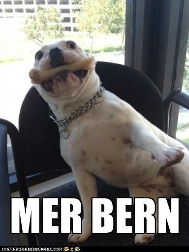 bone dogs Ermahgerd goggie - 6591750656
