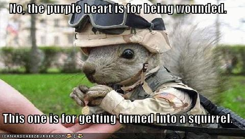 army goggles lolcats lolsquirrels purple heart squirrel sqwrl