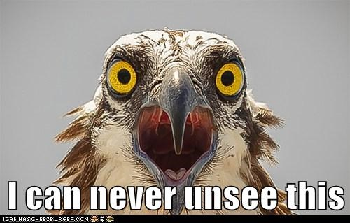 eagle,shocked,unsee,never,scared for life,lolz