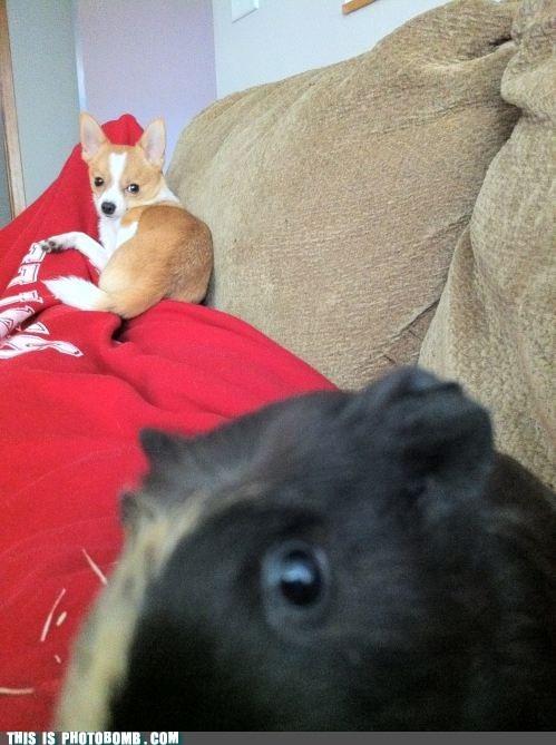 animals dogs pets - 6591921408