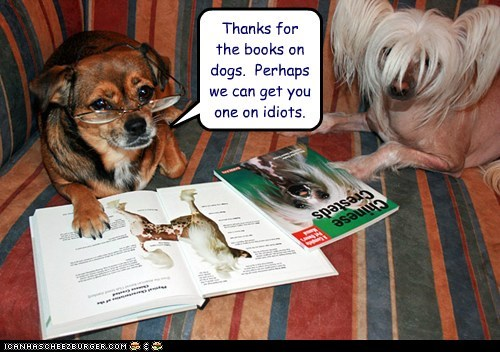 dogs,chihuahua,Chinese Crested Dog,book,idiot,glasses