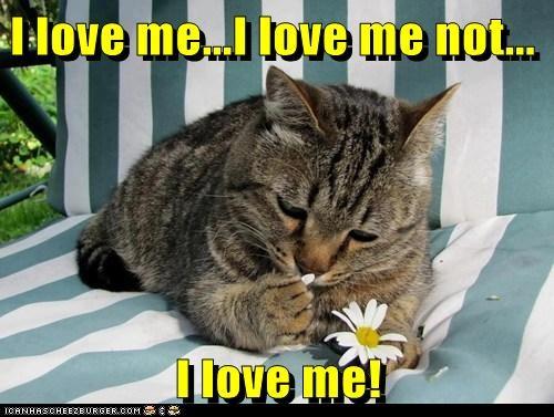 me captions ego love Cats self - 6592161792