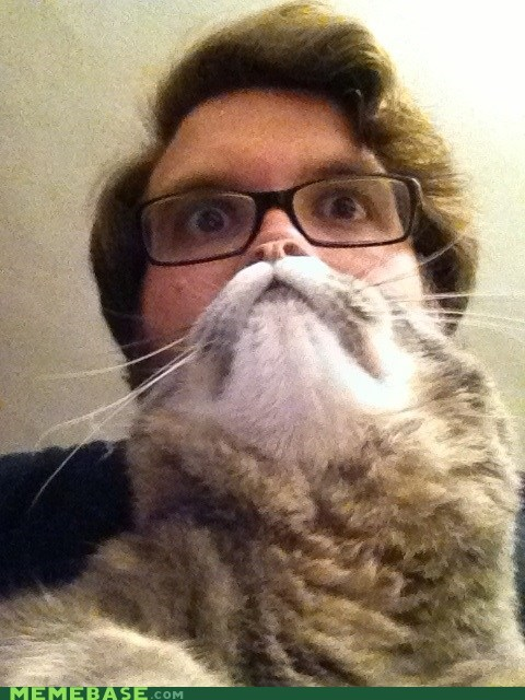 animal awesome beard cat omg - 6592182528