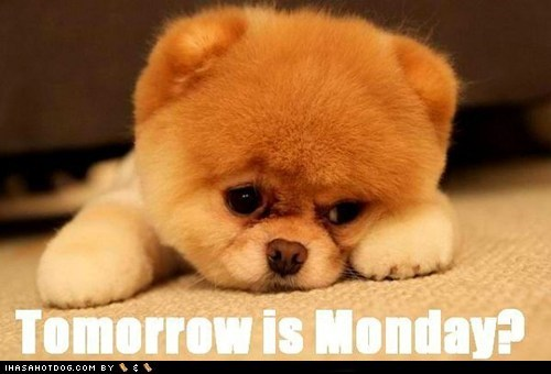 dogs,Mondays Suck,pomeranian,Sad,weekend
