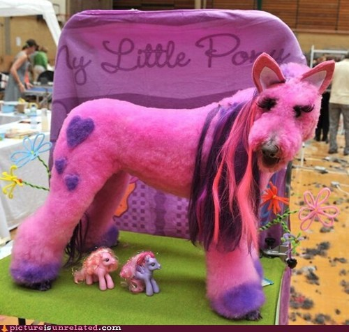 animal cruelty my little pony serious issue