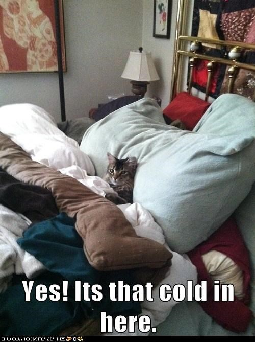 bed captions Cats cold comforter duvet freezing Pillow thermostat