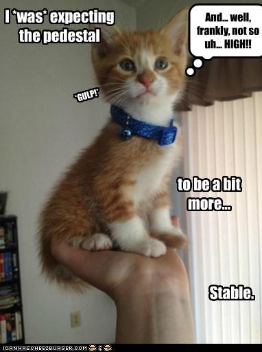 arm captions Cats hand high pedestal - 6592337408