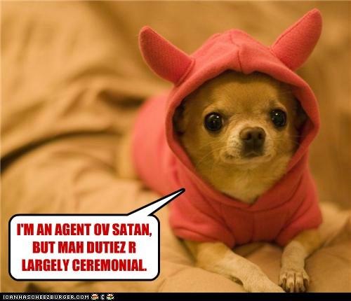 chihuahua devil costume - 6592383744