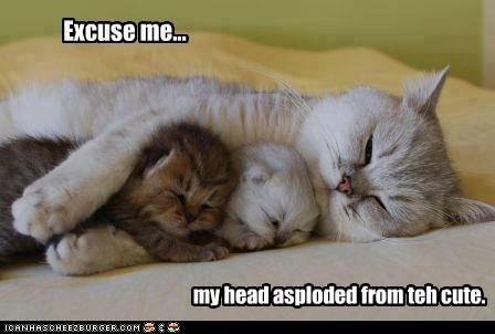 asplode captions Cats cute explode head kitten mom - 6592513024