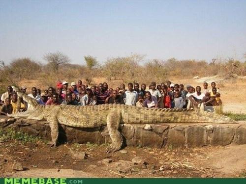 crocodile giant - 6592534272