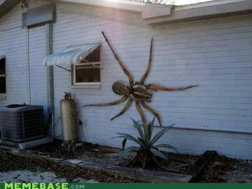 giant,Kill It With Fire,spider,texas