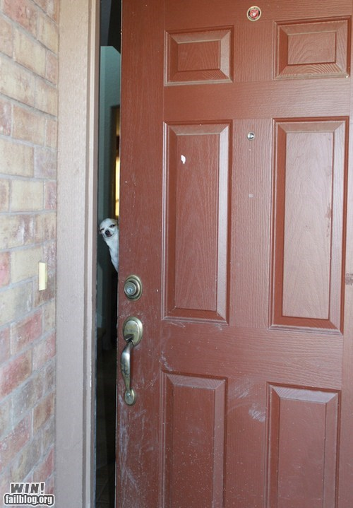 derp dogs door hello - 6592591872