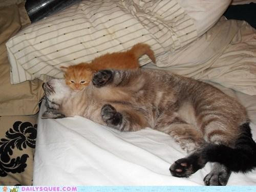 reader squee squee pet cat kitten snuggles - 6592688384