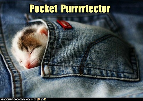 captions Cats jeans kitten pocket protector pun purr sleep - 6592933888