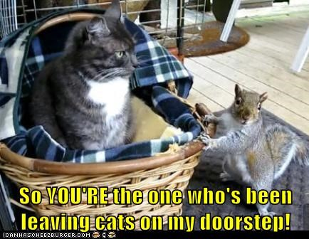 squirrel,Cats,basket,youre-the-one,doorstep,caught,red handed