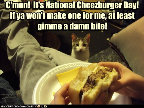 Cheezburger Image 6593237760