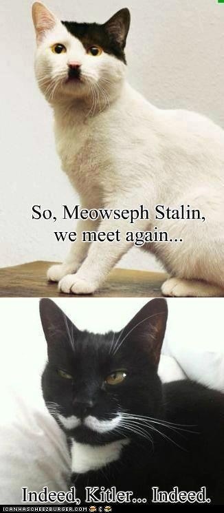 captions,evil,kitler,stalin,Cats,hitler