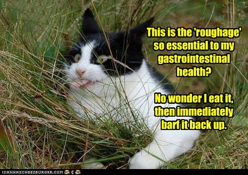 roughage captions grass Cats rough - 6593442816