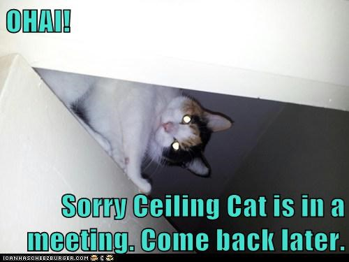 captions Cats ceiling cat later meeting message - 6593538048