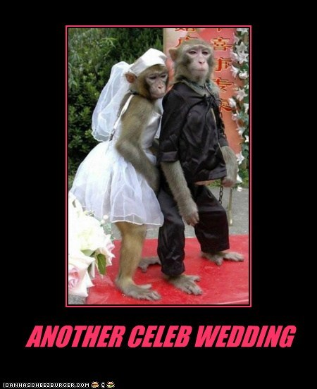 monkeys costume marriage wedding celeb another