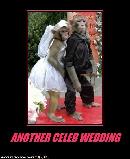 monkeys costume marriage wedding celeb another - 6593553920