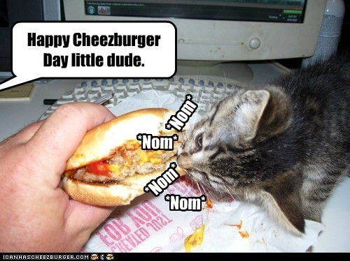 captions Cats cheezburger cheezburger day holiday lolcats nom - 6593612032