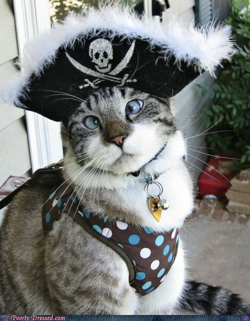 cat,pirate hat