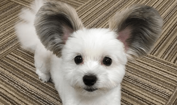 aww dogs ears instagram mouse - 6593797