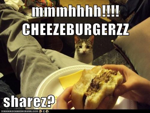 Cheezburger Image 6593856512