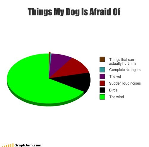 dogs Pie Chart scaredy cat - 6593920000