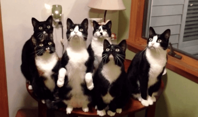 cute cats | animals in sync