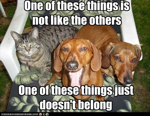 dogs dachshund cat one of these things yawn intruder - 6594064640