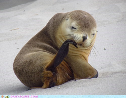 nibble scratch seal itch flippers squee