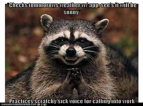 evil,raccoon,plotting,work,sunny,weather,boss,sick,faking
