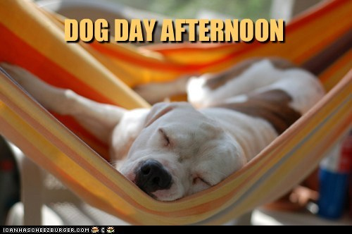 dogs pitbull dog day afternoon hammock nap resting