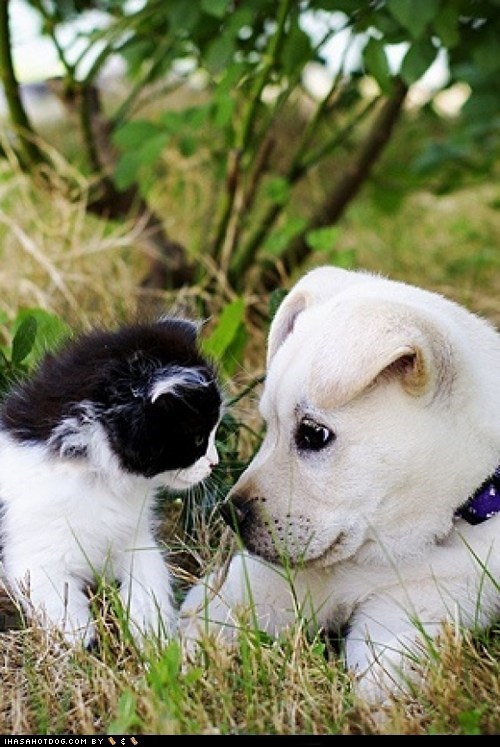 cat dogs kittehs r owr friends kitten puppy - 6594220544