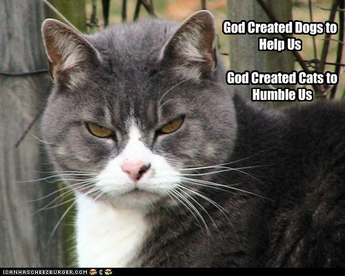 God Created Dogs to Help Us God Created Cats to Humble Us