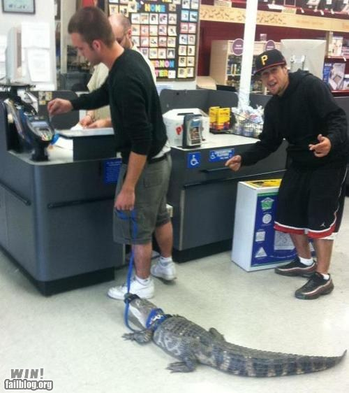 alligator,going for a walk,pet,store,walking,weird,what