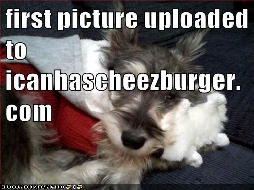 Cheezburger Image 6594413056