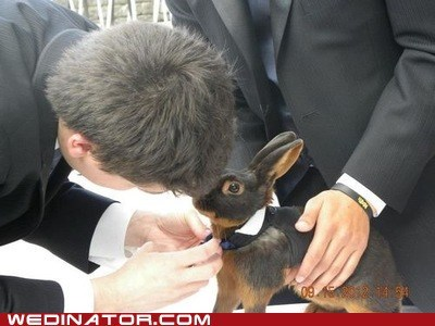 bunny collar formal pet tie