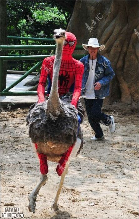 ostrich riding Spider-Man weird what - 6594498816