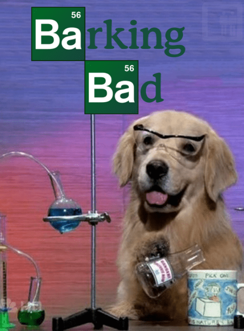 breaking bad dogs drugs i have no idea what im doing meth puns science TV tv shows - 6594504960