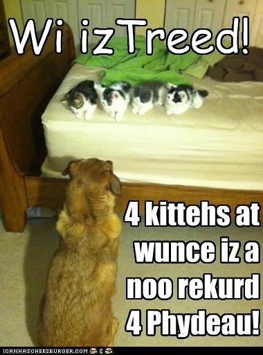 4 kittehs at wunce iz a noo rekurd 4 Phydeau! Wi izTreed!