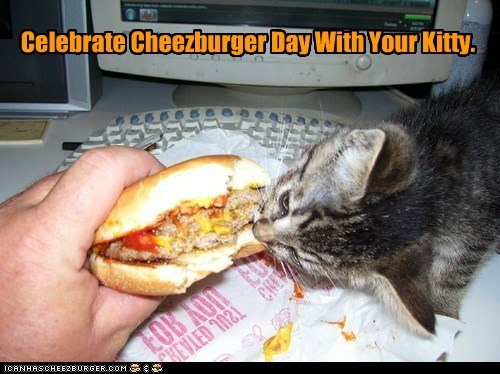Cheezburger Image 6594545408